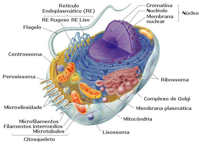 B.log.ia 2.0: Tipos celulares en eucariotas
